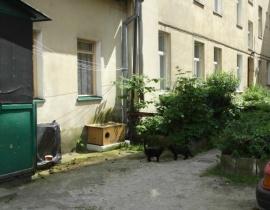 Podwórko domu na Lendziona (Kastanienweg), gdzie urodzi³ siê Günter Grass